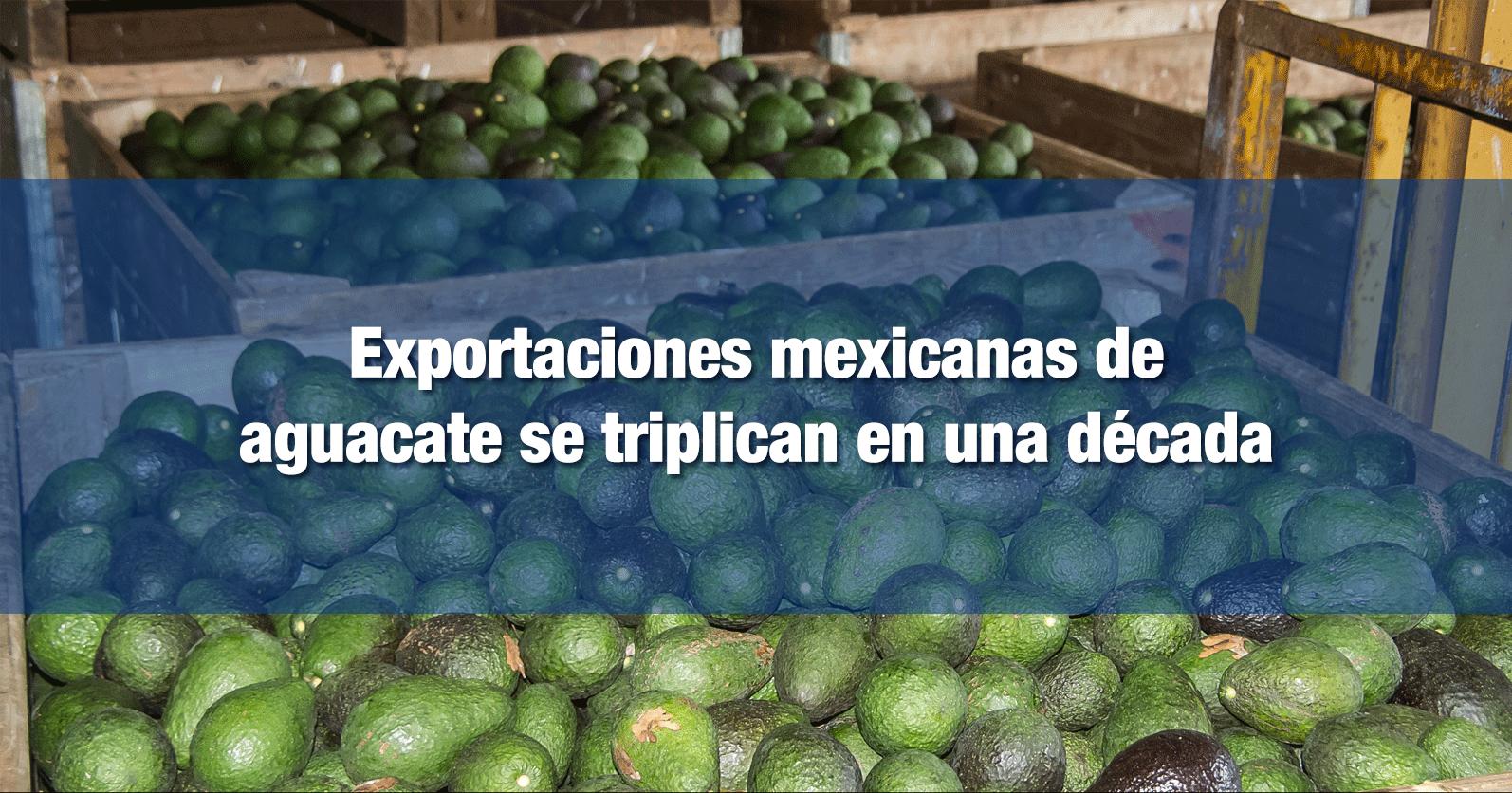 Exportaciones mexicanas de aguacate se triplican en una década