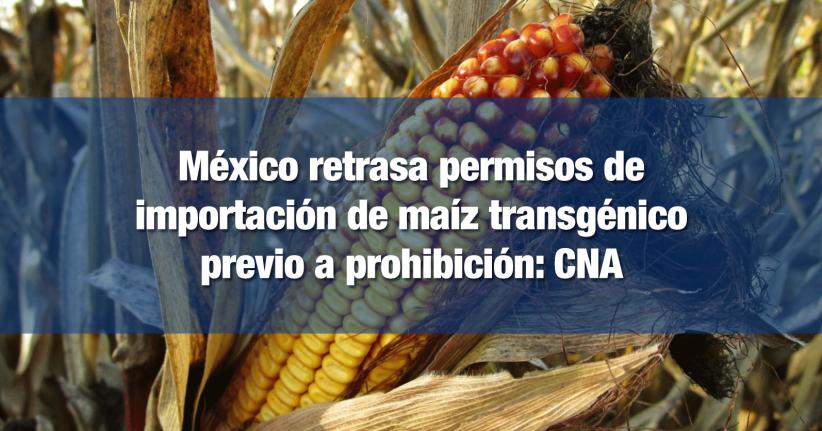 México busca reducir las importaciones de maíz transgénico